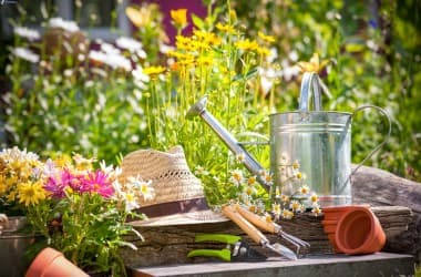 Новый закон о садоводстве и огородничестве